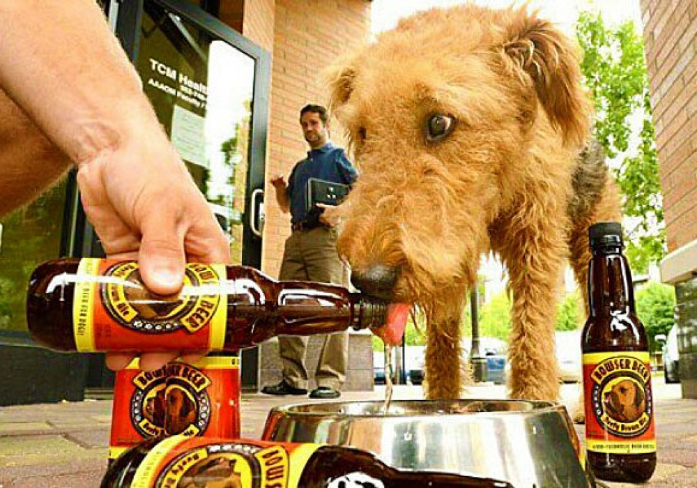 Bowser Beer Cool Dog Treat to Buy