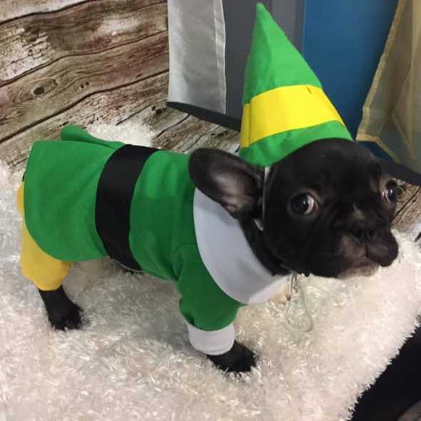 Bud-the-Elf-dog-Outfit.jpg