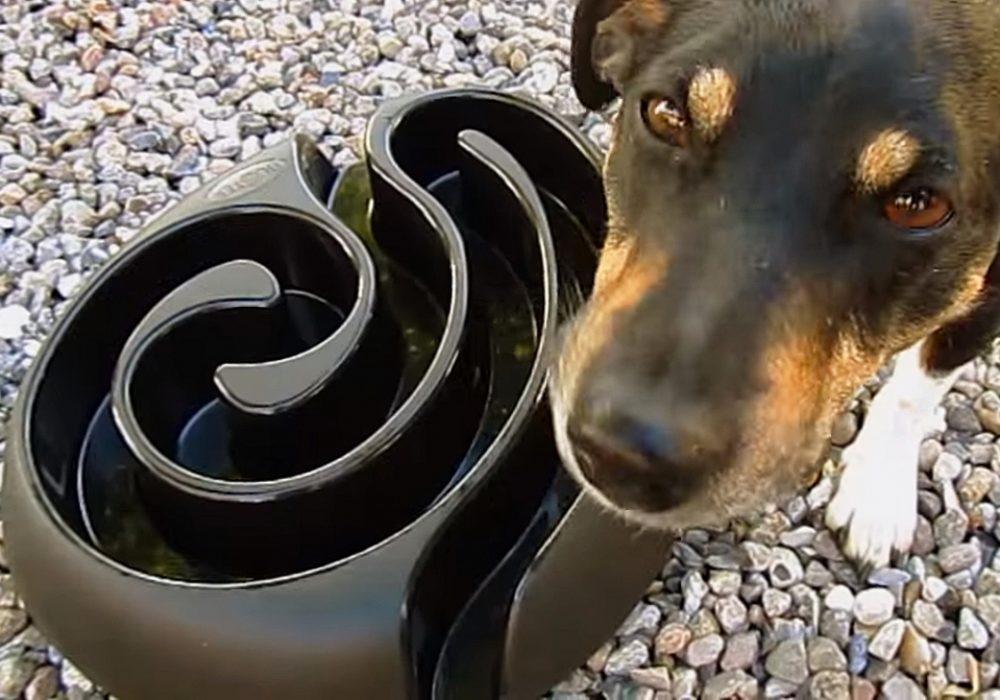 Buster Dog Maze Buy Unique Pet Stuff
