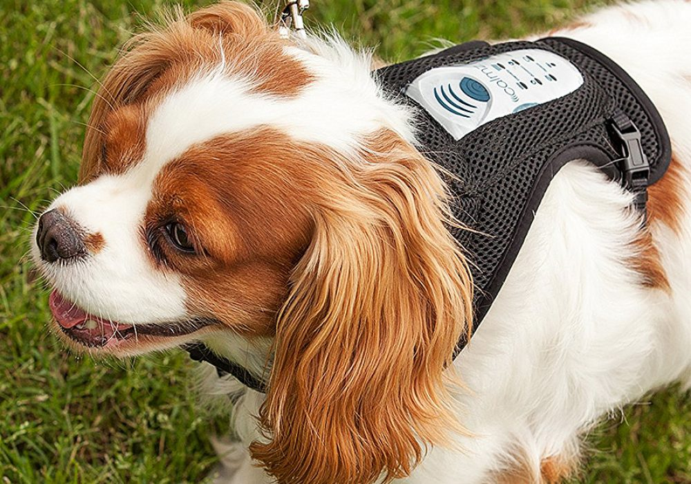 Calmz Anxiety Relief System for Dogs Drug Free