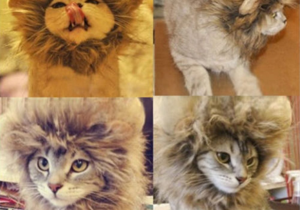 Cat Lion Mane Wig Cute Gift