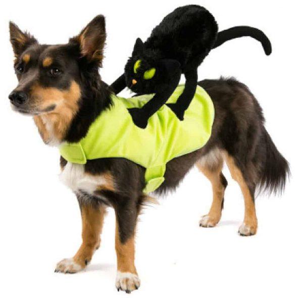 Cat-Rider-Dog-Costume.jpg