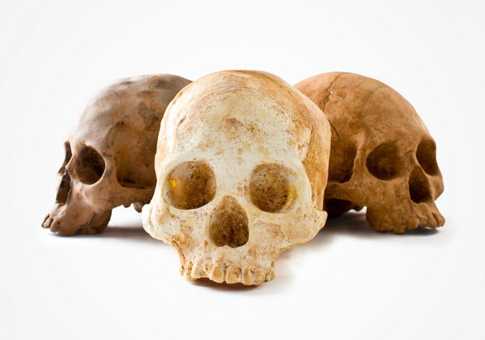 Chocolate Skulls Tasty Haloween Treat