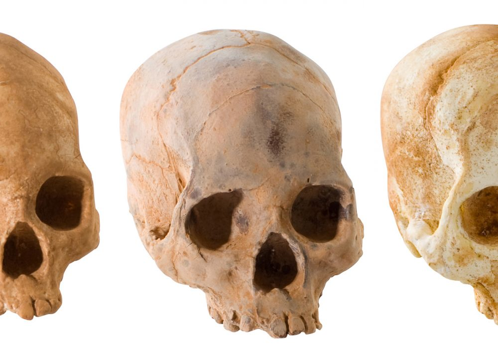 Chocolate Skulls White Dark and Bone Flavors