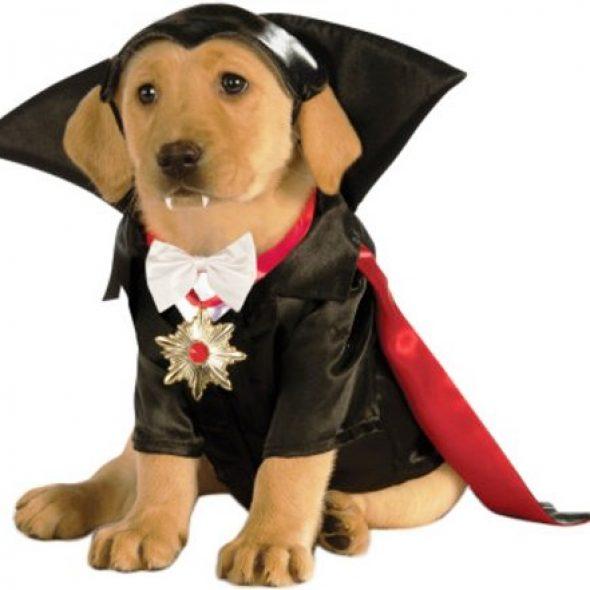 Classic Dracula Dog Costume