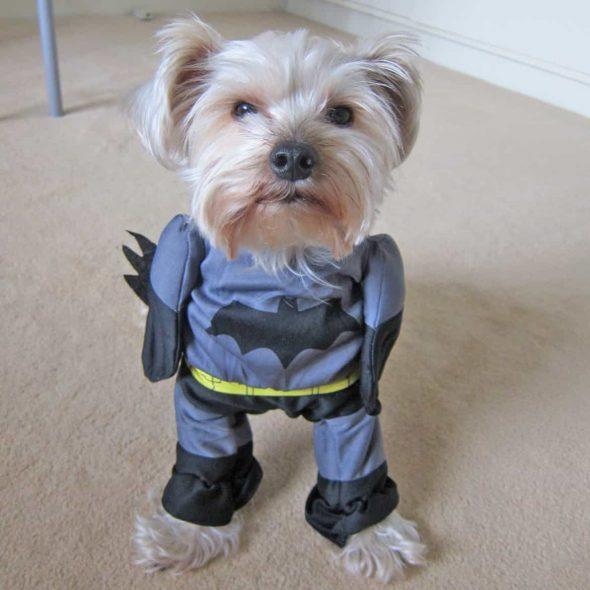 Cute-Batman-Dog-Costume.jpg