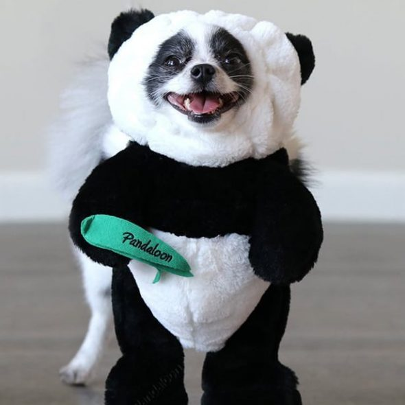Cute-Panda-Dog-Costume.jpg