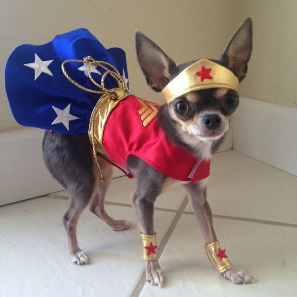 Cute-Wonder-Woman-Dog-Costume.jpg