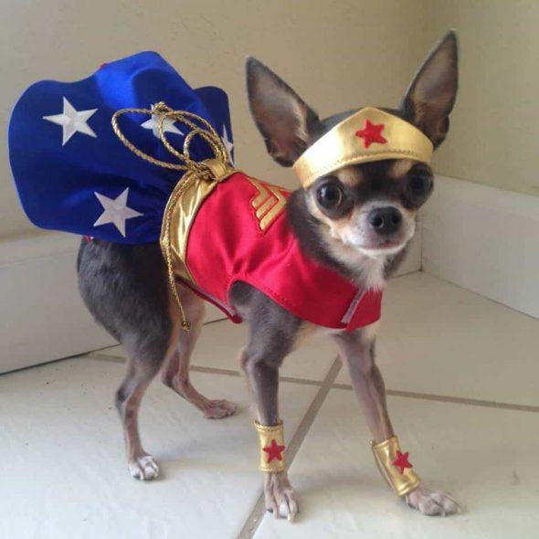 Cute-Wonder-Woman-Dog-Costume.jpg