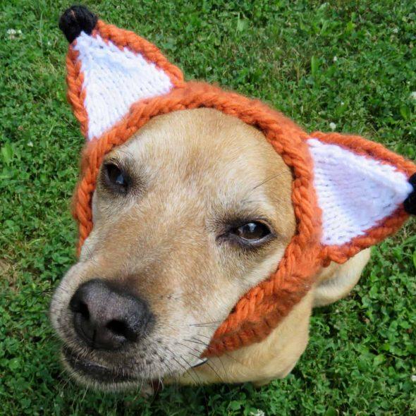 Dog-Fox-Hat-Costume.jpg