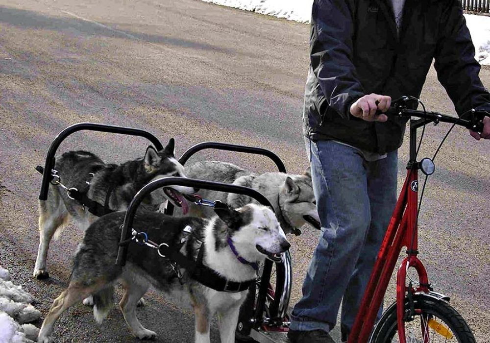 Dog Powered Scooter Novelties