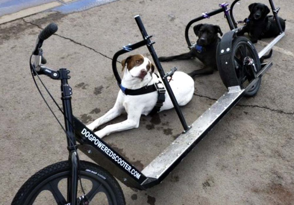 Dog Powered Scooter Scooters