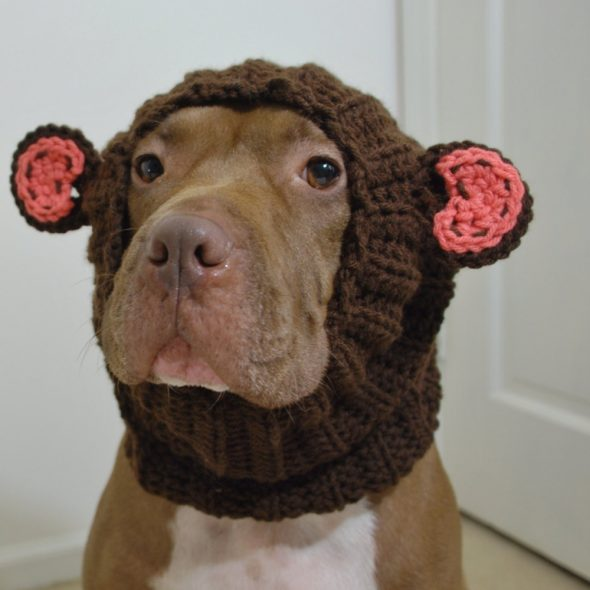 Dog-Snood-Monkey-Costume.jpg