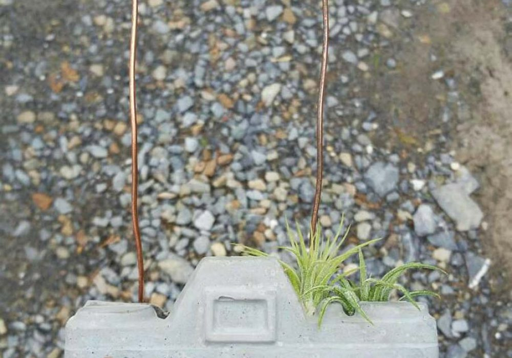 Dovekien Finch Concrete Camera Air Plant Gardening
