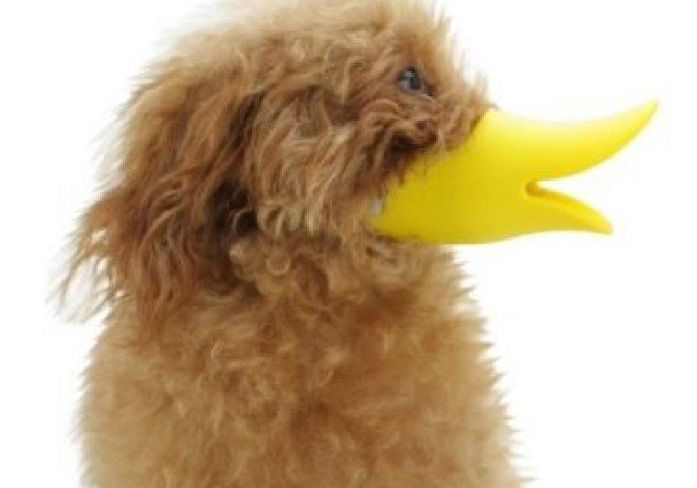 Duck Dog Muzzle Pet Gift Ideas