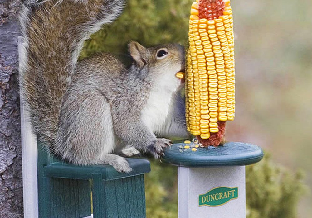 duncraft-eco-squirrel-table-chair-feeder