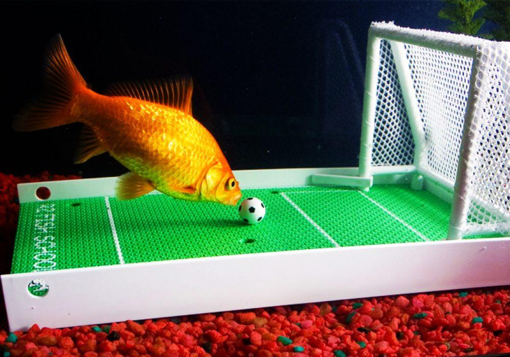 Fish Training Kit R2 Fish School