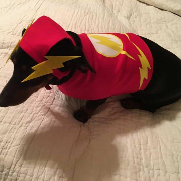 Flash-Small-Dog-Costume.jpg