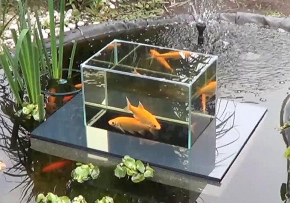 Flying Aquarium Fish Observatory Cool Novelty Item