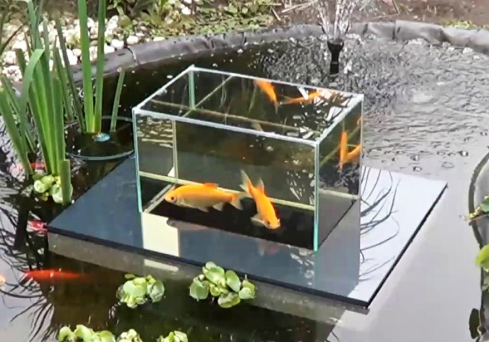 Flying Aquarium Fish Observatory Gift for House Decor
