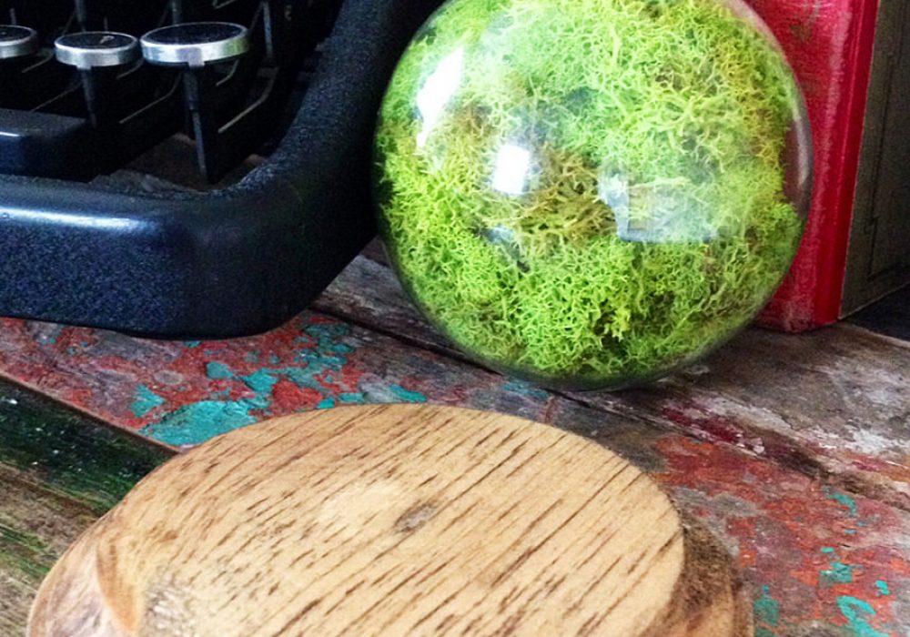 fox-and-dye-design-repurposed-lightbulb-moss-terrarium-walnut-stained-wood
