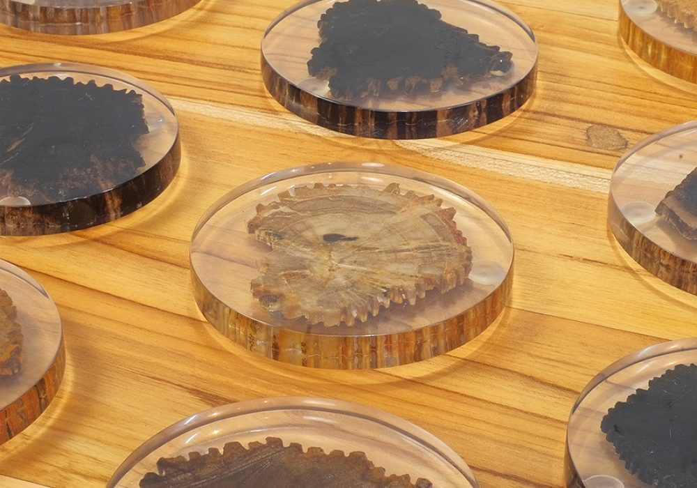 From The Source Petrified Wood Coaster Tabletop Item