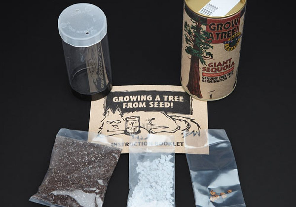 Grow Your Own Giant Sequoia Germination Kit DIY Gift Idea for Kids