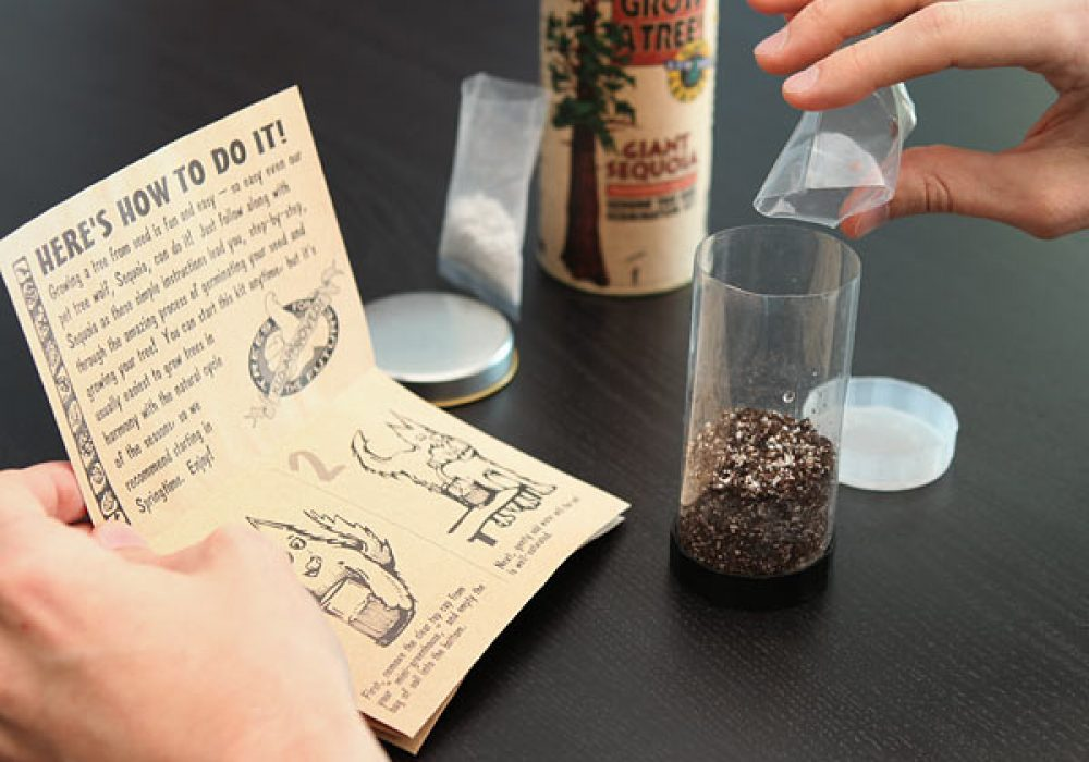 Grow Your Own Giant Sequoia Germination Kit Plant Something Awesome