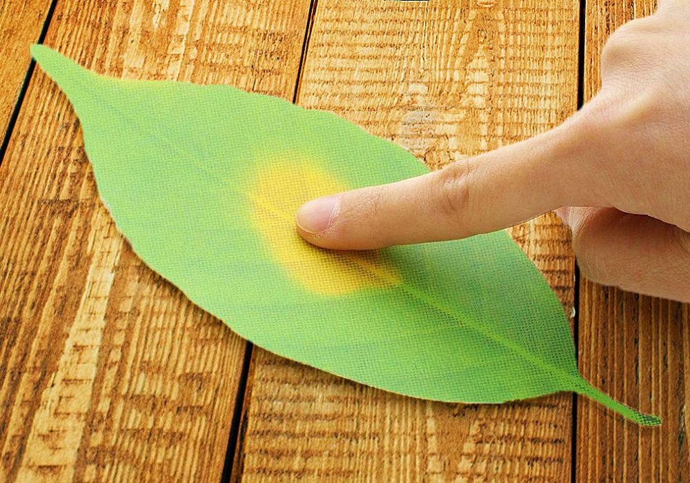 Hideyuki Kumagai Leaf Thermometer Paper Cool Present Ideas