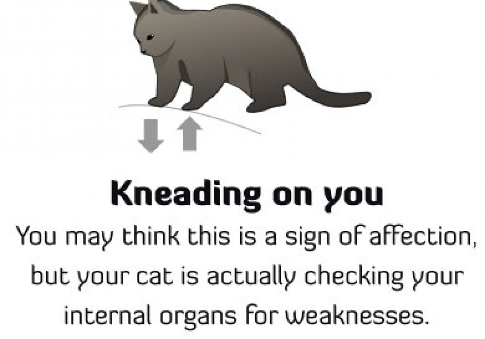 How to Tell If Your Cat Is Plotting to Kill You Feline Kneeding