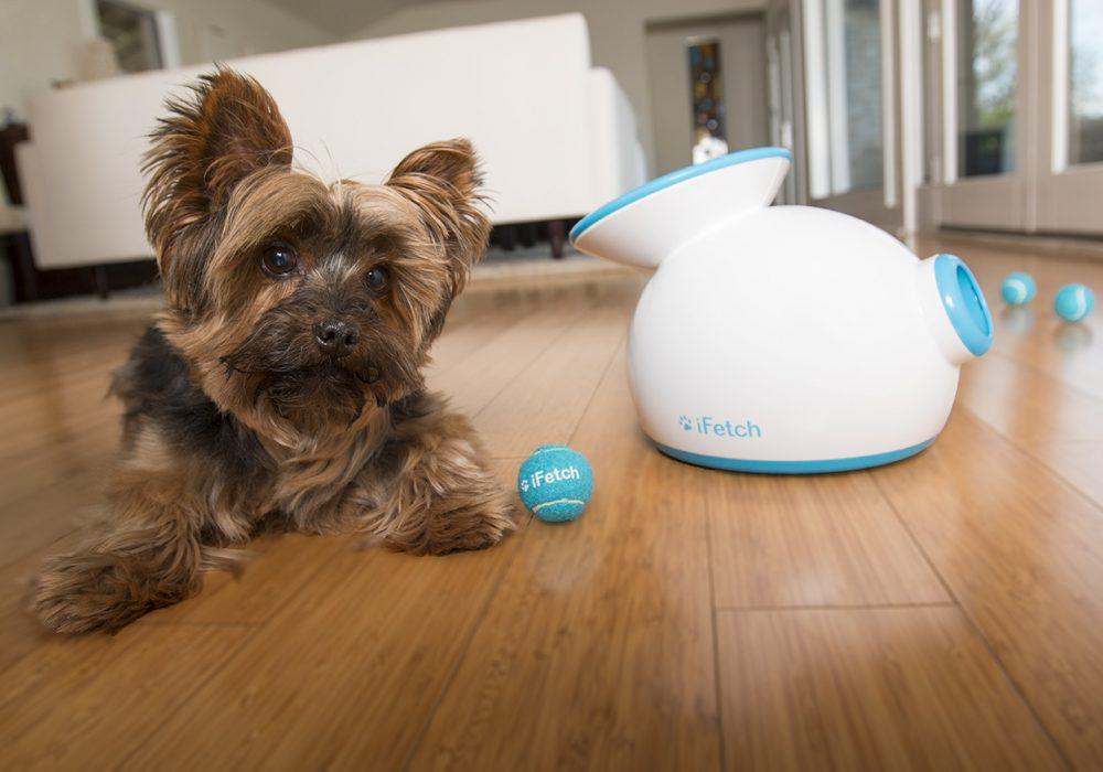 Ifetch Dog Toy Small Dog Blue Tennis Balls