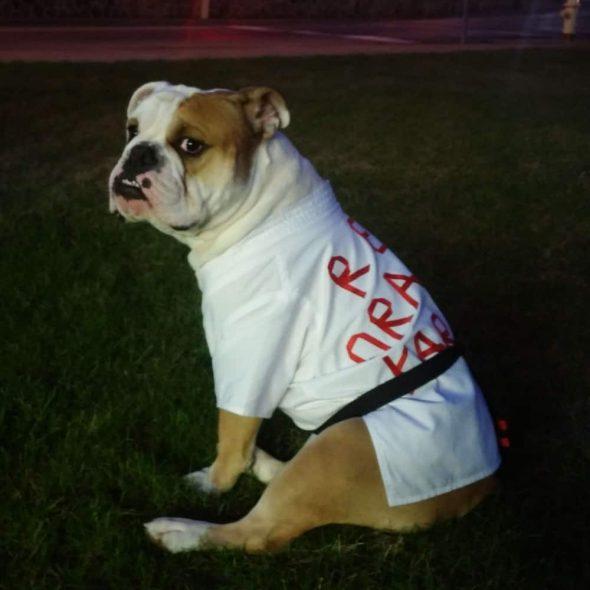 Karate-Gi-Dog-Costume.jpg
