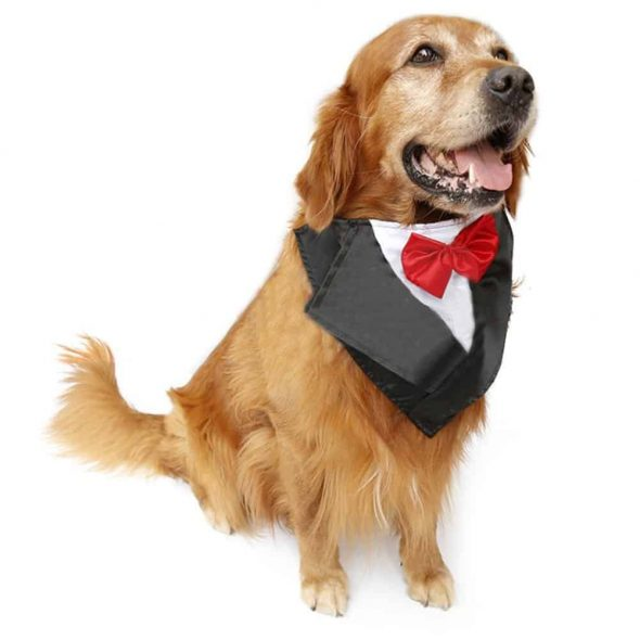 Large-Dog-Wedding-Tuxedo-Collar.jpg