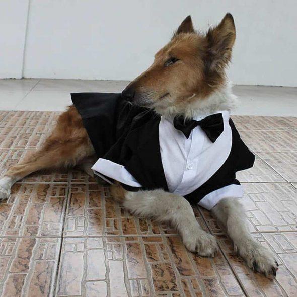 Large-Dogs-Bowtie-Tails-Suit-Costume.jpg