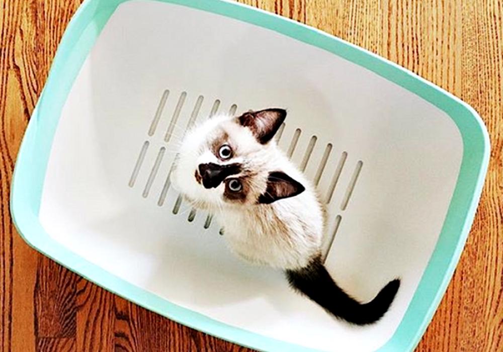 Luuup Litter Box Cat Pan