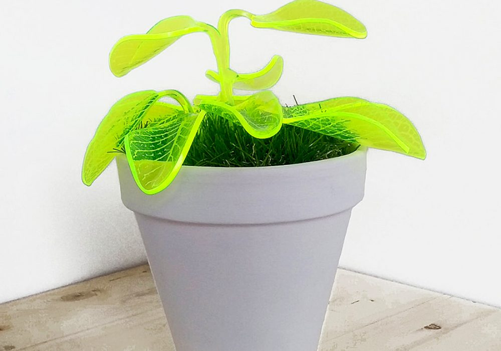 Mar De Fe Night Light Plant Illuminating