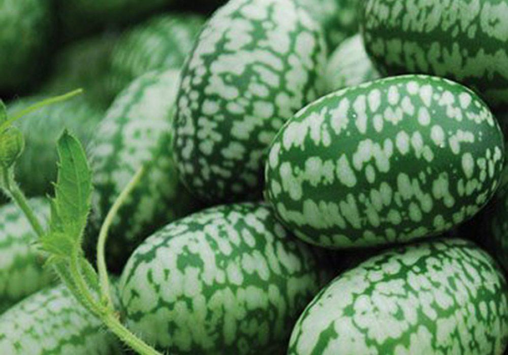 Miniature Watermelon Seeds Cucamelon