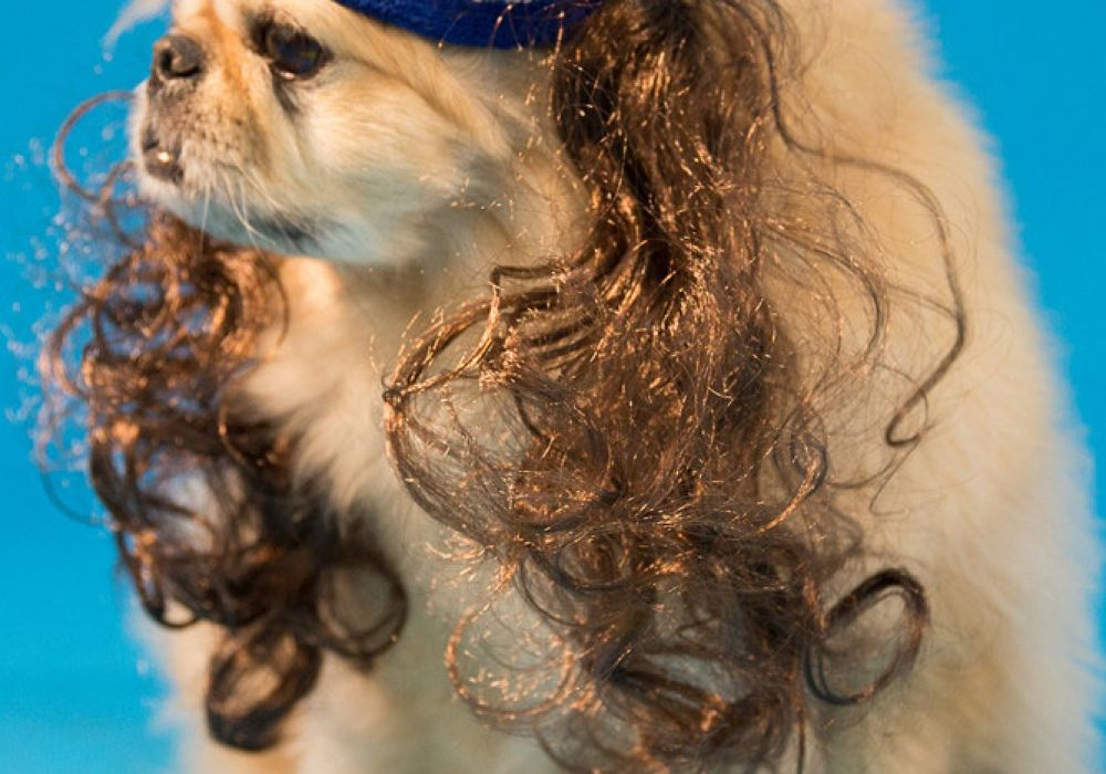 Mullet On The Go The All American Weird Dog Costume to Buy