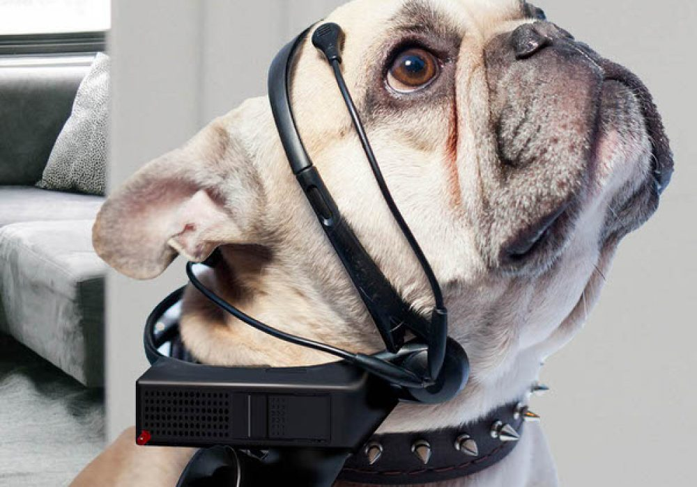 NSIS No More Woof Crazy Invention Talking Dog