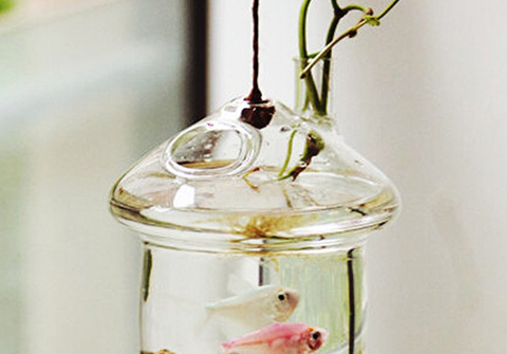 New Dream World Hanging Mushroomhouse Terrarium Nice Gift Idea