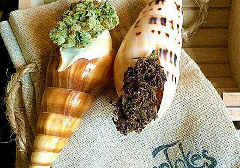 OceanTokes Seashell Smoking Pipe Gift Idea for Pot Head Friends