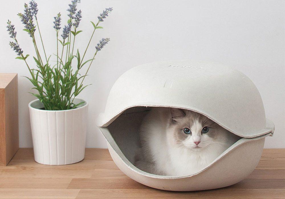 Oppo-Cat-Shell-Buy-Cute-Pet-Gift-Idea