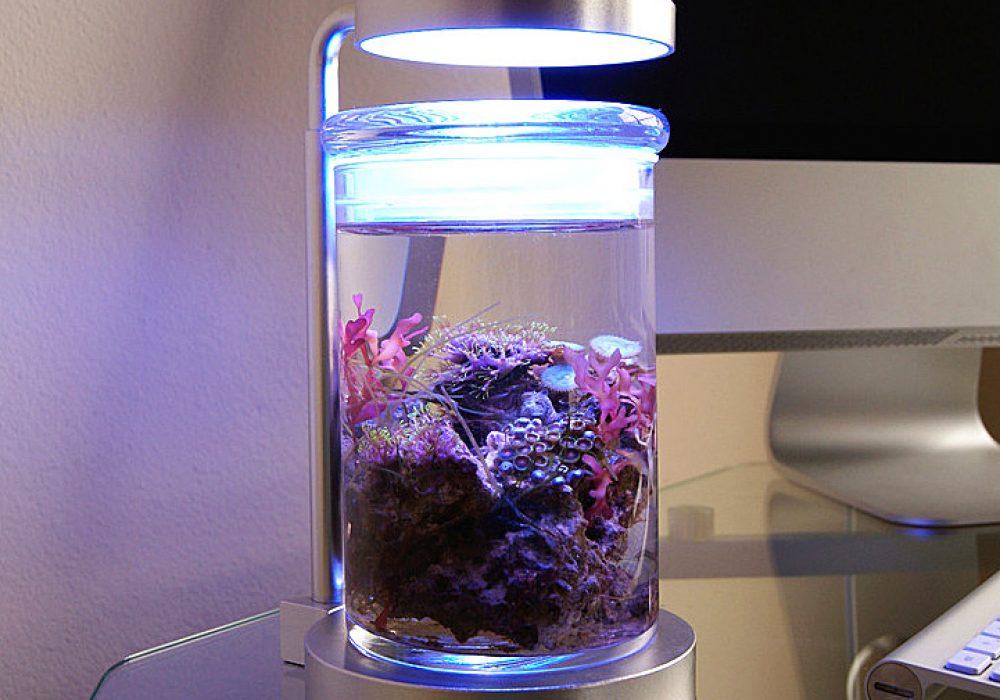 PJ Reefs Miniature Saltwater Aquarium Lamp Gift Idea For Pet Fish Owner