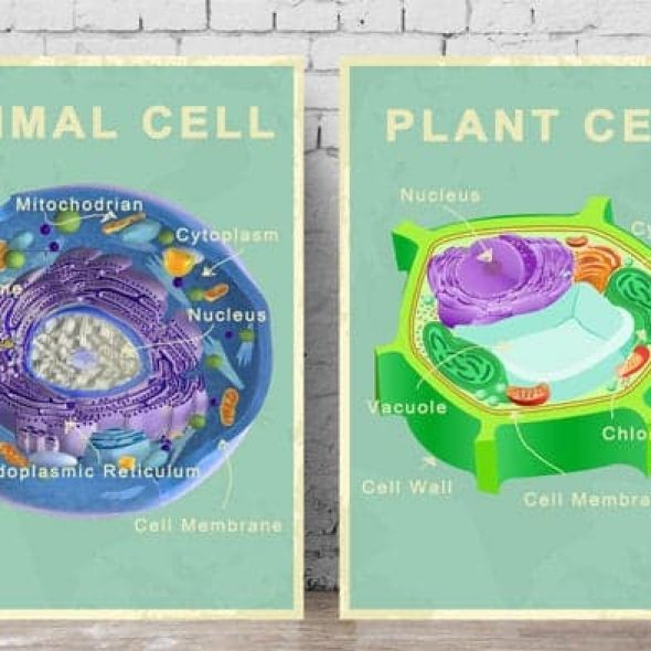 PalaeoPrintsStudio Printable Animal and Plant Cell Posters