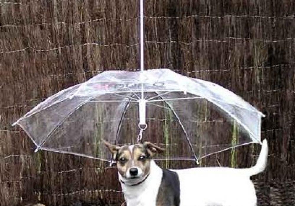 Pet Umbrella and Dog Leash Novelty Item