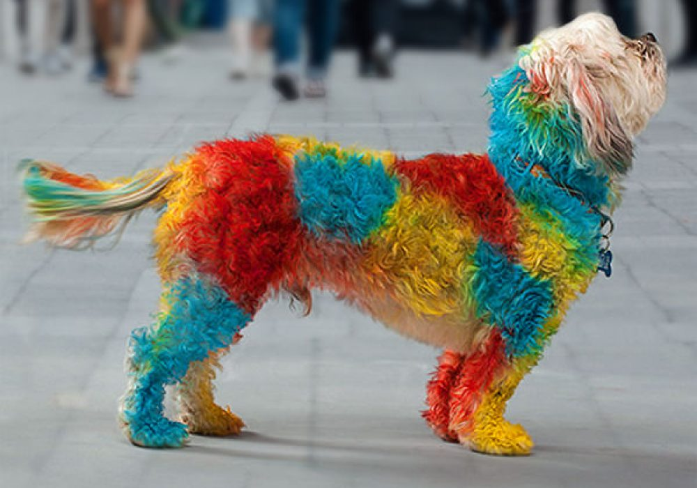 PetPaint Pet Hair Spray Cool Dog Costume