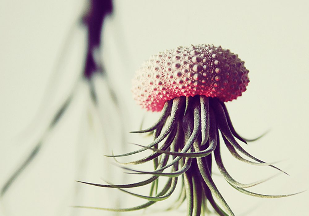 Petit Beast Jellyfish Air Plant Good for Wedding Decoration