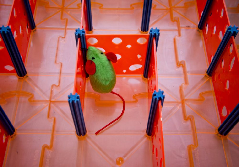 Rat Maze Toy Mouse Trapped