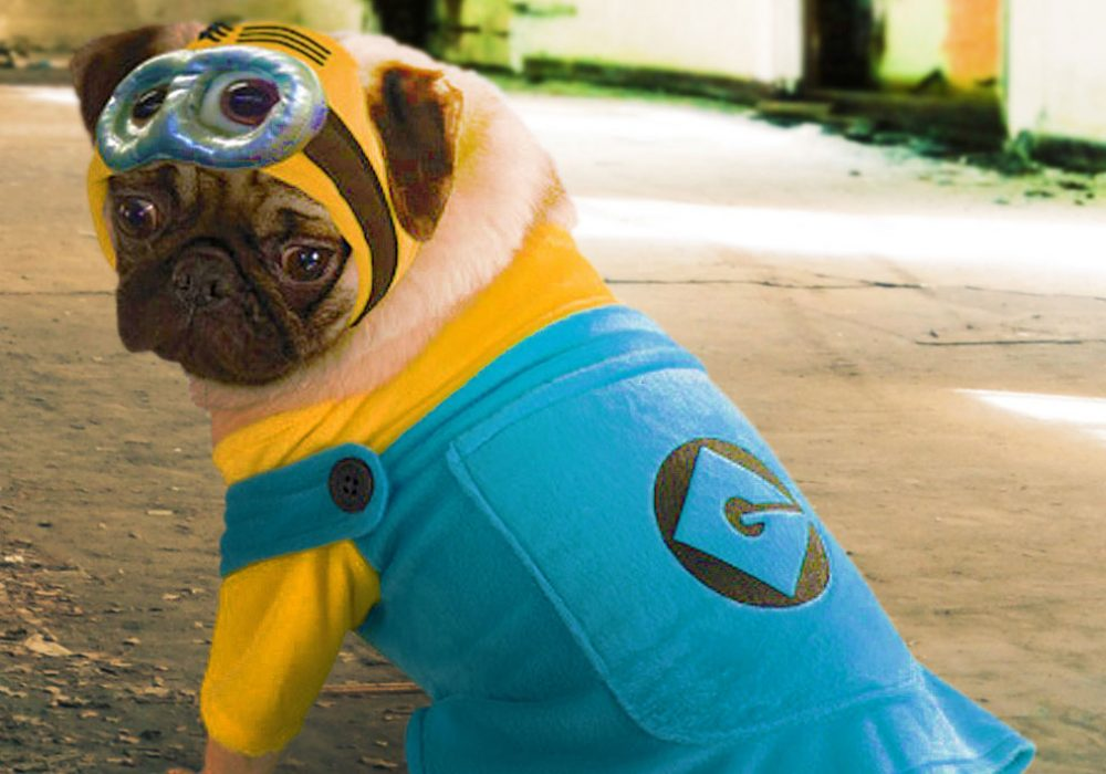 Rubies-Costume-Despicable-Me-Minion-Printed-Pet-Cute-Costume-for-Cosplay-and-Halloween