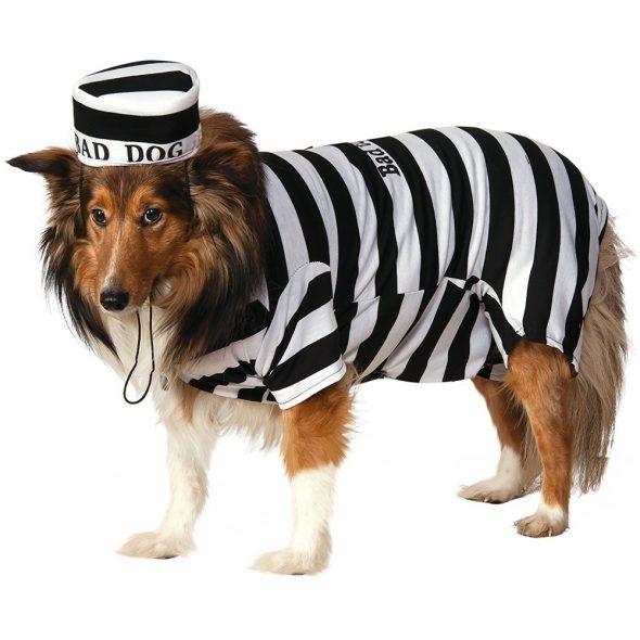Striped-Dog-Prison-Costume.jpg